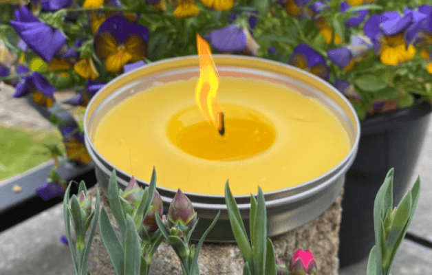 Citronella Candle: An Effective Insect Repellent