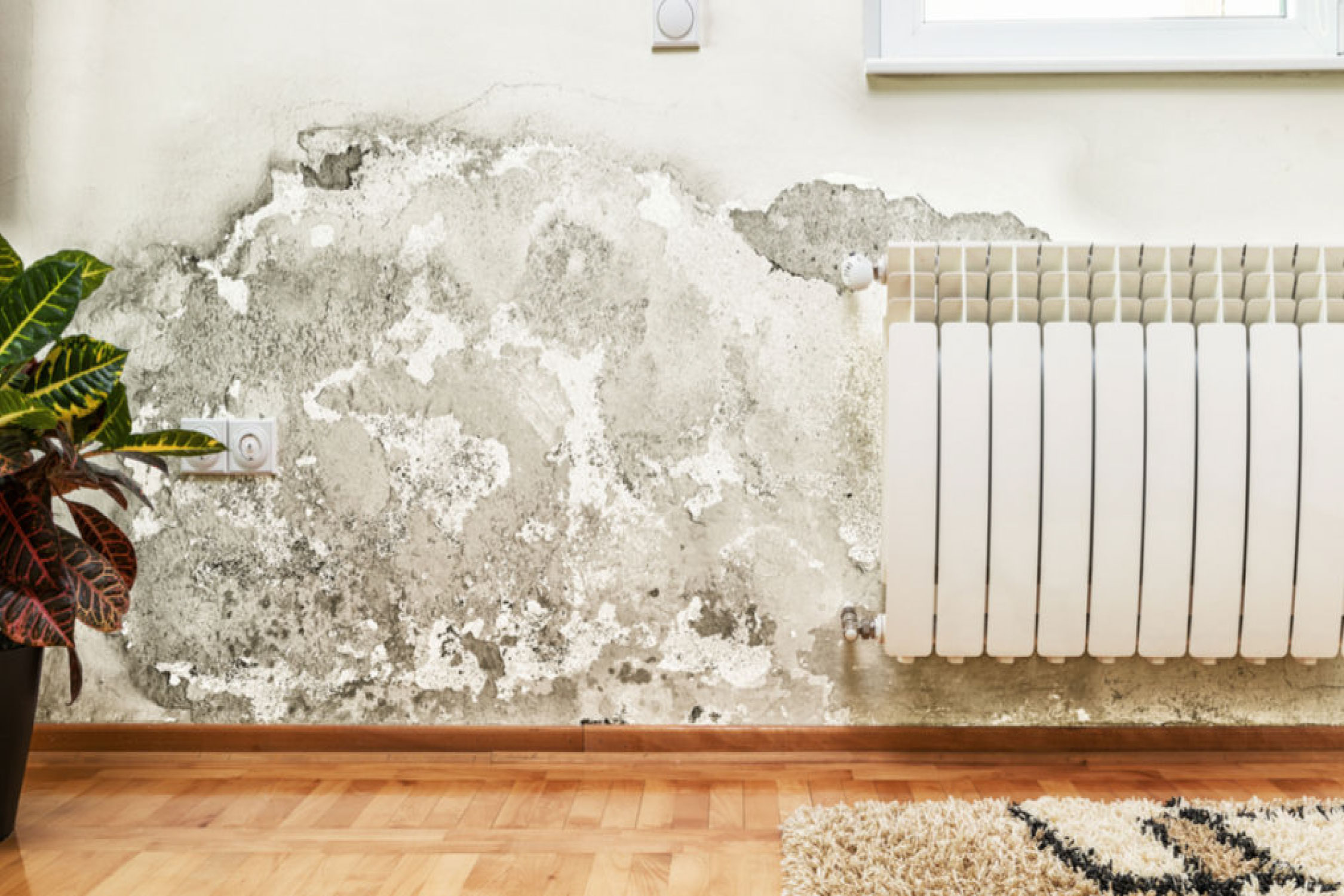 Indoor Humidity: How to Control It - Tips